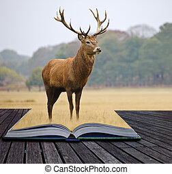 Creative concept image of red deer stag in pages of book -...