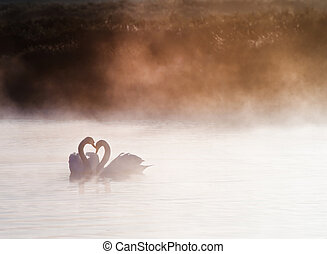 Touching romantic scene of mated pair of swans on foggy...