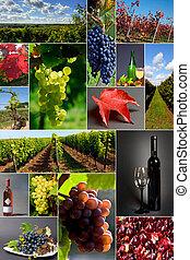 Auswahl, zum, Wein
