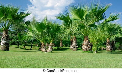 Beauty palm-trees in Antalya