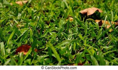 green grass sliding shot