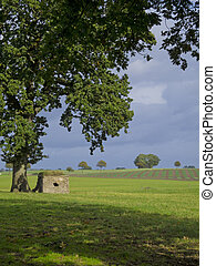 stone shed beneath a giant oak tree in the fields