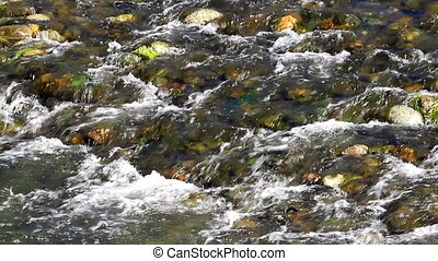 River - Beautiful river detail