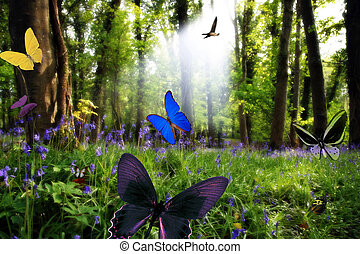 paradise in nature - a wood full of bluebells