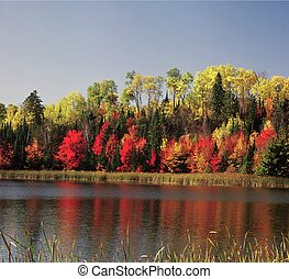 Blind Ash Bay ~ Kabetogama Lake - Vivid autumn foliage...