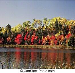 Blind Ash Bay ~ Kabetogama Lake - Vivid autumn foliage...