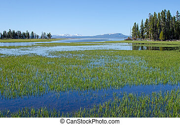 Pelican Creek, Yellowstone National Park, Wyoming, USA -...