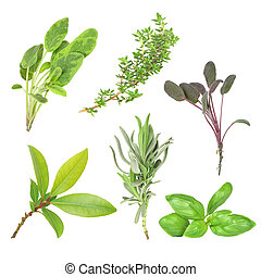 Herbs - Organic herb selection of leaves of variegated sage,...
