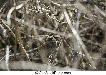 poco, pájaro, camuflado, arbusto