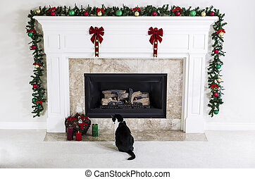 Christmas Kitty - Family cat looking at Christmas Candles...