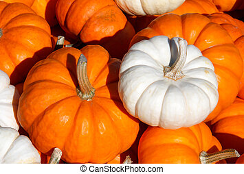 Orange and White Pumpkins - Orange and white pumpkins in a...