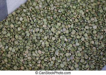 Lentil Seeds , green lentil