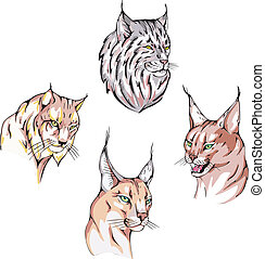 heads of lynx - Heads of lynx Set of vector illustrations