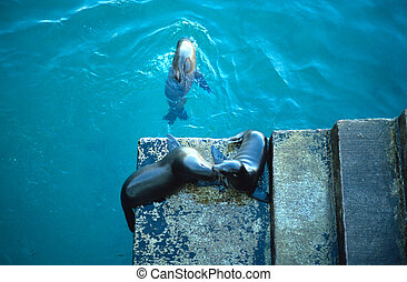 Galapagos sea lions - Two Galapagos sea lions (Zalophus...