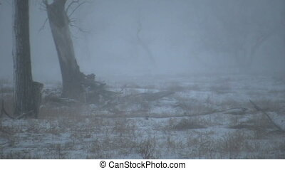 Whitetail Buck Walking in Snowstorm - a whitetail buck...
