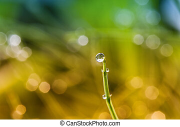 Drop of water - Beautiful drop of water on grass stalk.