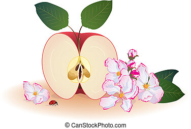 apple and ladybird - vector background with flowers of...