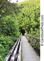 Bridge to Maui Hawaii Bamboo Forest