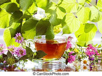 herbario, té, fresco, hierbas