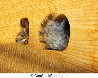 squirrel in a lodge