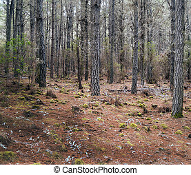 Tree trunks surrounded by green stones, and leaves taken in...