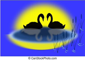 Two Elegant Swans - Two elegant swans in a pond with a...