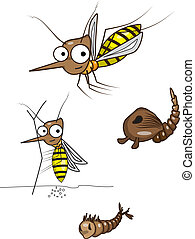 The life cycle of the mosquito
