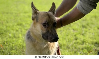 Man holding German shepherd dog