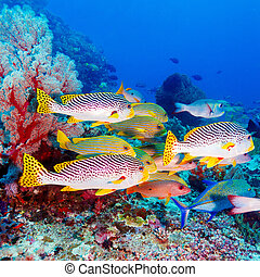 Tropical Fishes near Colorful Coral Reef - Underwater...