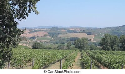 Tuscan countryside and vines