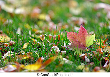 colorful leaves in grass