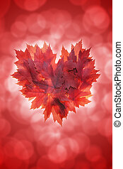 Heart Shape Maple Leaves Red Background