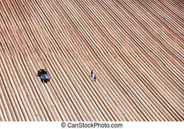 Agriculture field lines and two farmers with tractor, no...