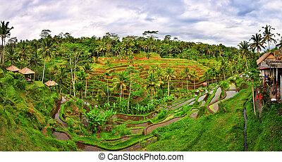 Balinese green rice fields terrace panorama, Bali, Indonesia
