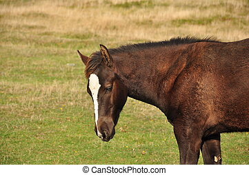 young horse in pasture