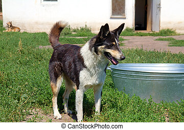 Stray dog in the shelter - Homeless dog in the local shelter...