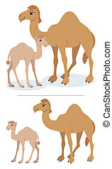 Camels - Baby camel and his mother. Below are the same...