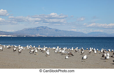 Seagulls on the beach. Costa del Sol, Andalusia Spain