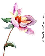 Dahlia, flor, aquarela, Ilustração