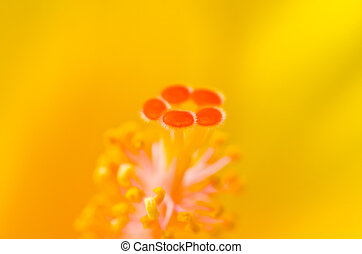 Close up carpel - Close up and focus in carpel