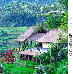 Traditional Village with Rice Field in Jungle