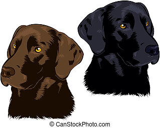 Labrador Retriever - Chocolate and Black Lab illustrations
