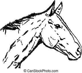 Illustration of a horse's head