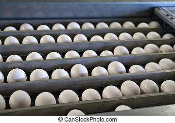 Eggs in a production line packing - Eggs in a modern...