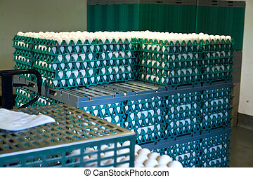 Boxes of farm eggs in a production poultry farm