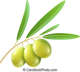 green olives - Vector illustration of detailed green olives...