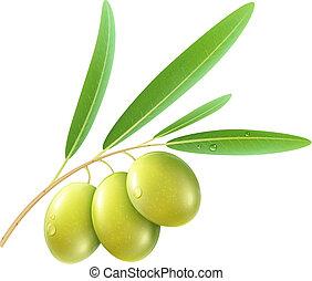 green olives - Vector illustration of detailed green olives...