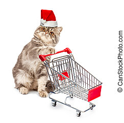 Cat in a Christmas cap with a cart on white background