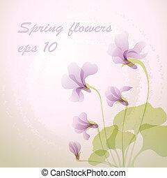 Beautiful spring violet flower
