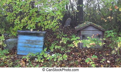 derelict beehives in old garden - derelict beehives in old...